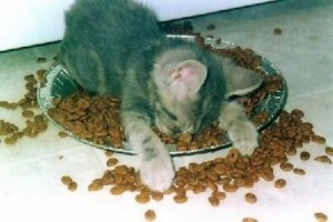 cat_in_food_bowl_small
