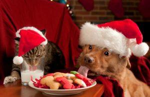 dogcatcookies