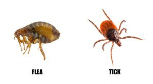flea_vs_tick